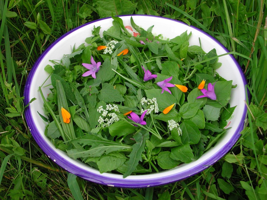 wildkraeuer-salat-4