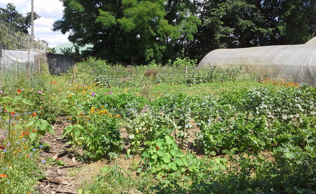 Vermehrung von Saatgut in der Gärtnerei