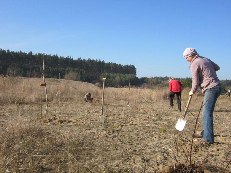 Pflanzung Milmersdorf